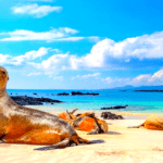 Best Times to Visit Galapagos Islands