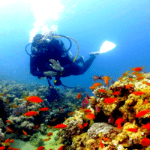 Diving in Egypt: programs, prices, and sites
